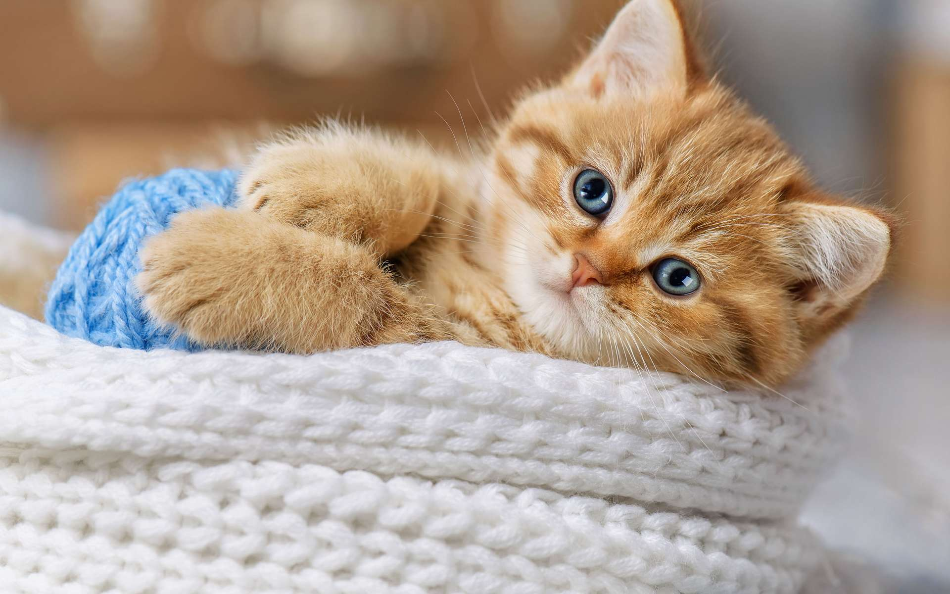pourquoi adopter un chat